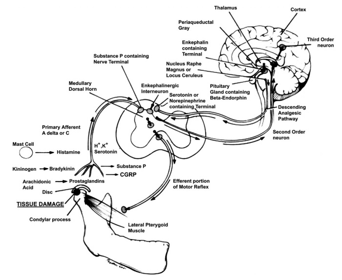 Onemocnění temporomandibulárního kloubu | uLékařbyroncaspergolf.com